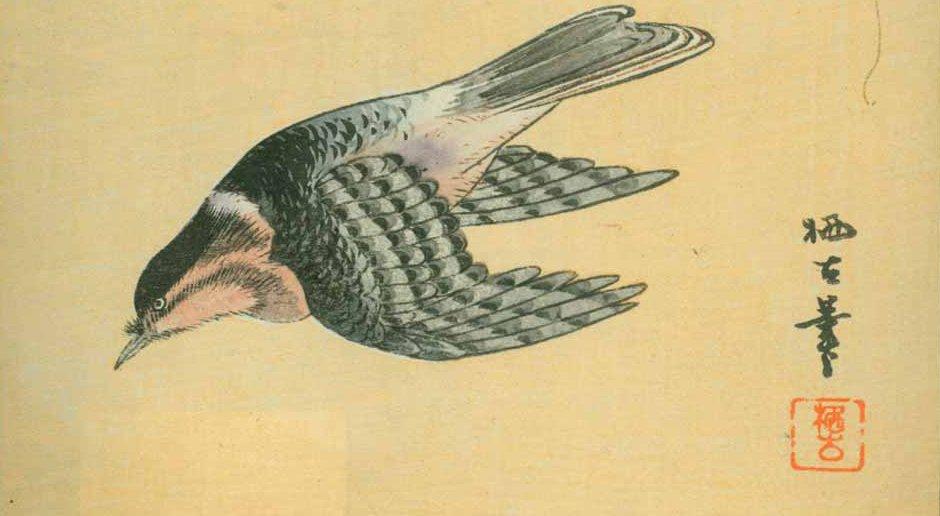 bird_cut