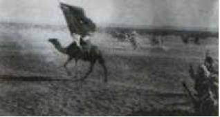 Photo du chameau
