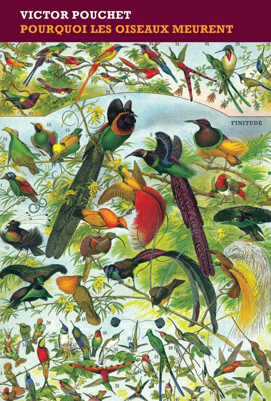 Pourquoi les oiseaux meurent - Victor Pouchet