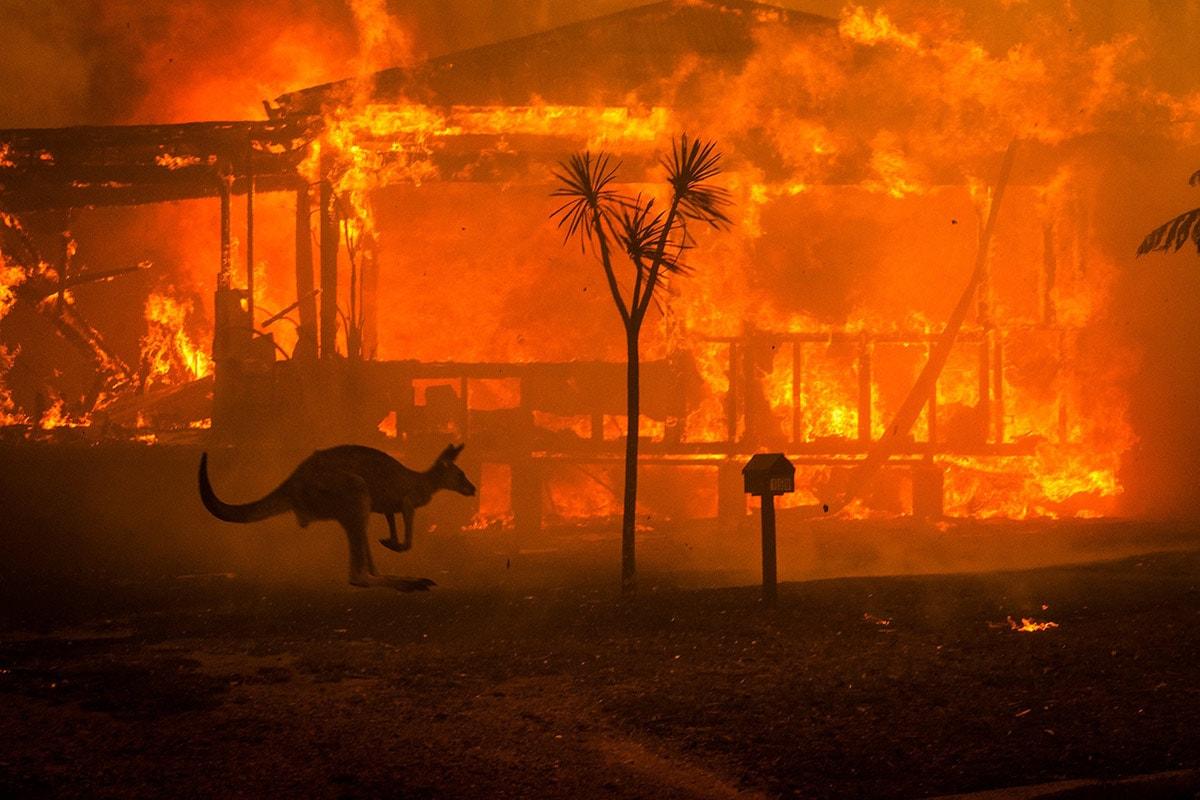 Un kangourou fuit les feux et passe devant une maison en flammes dans le lac Conjola le 31 décembre 2019.
