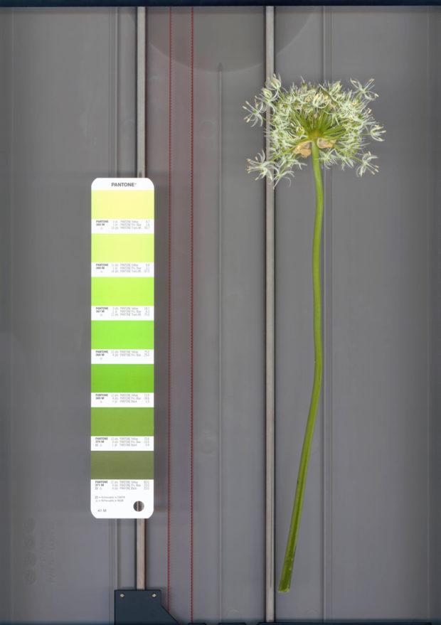 fleur et pantone sur scanner